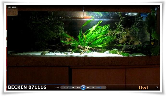 http://uwe.edatasystem.com/aquarium2016/101becken0711.JPG