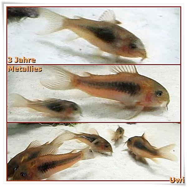 http://uwe.edatasystem.com/aquarium2016/1023jahremetallies.jpg