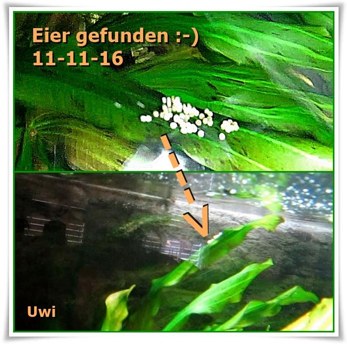 http://uwe.edatasystem.com/aquarium2016/105eier1011.jpg