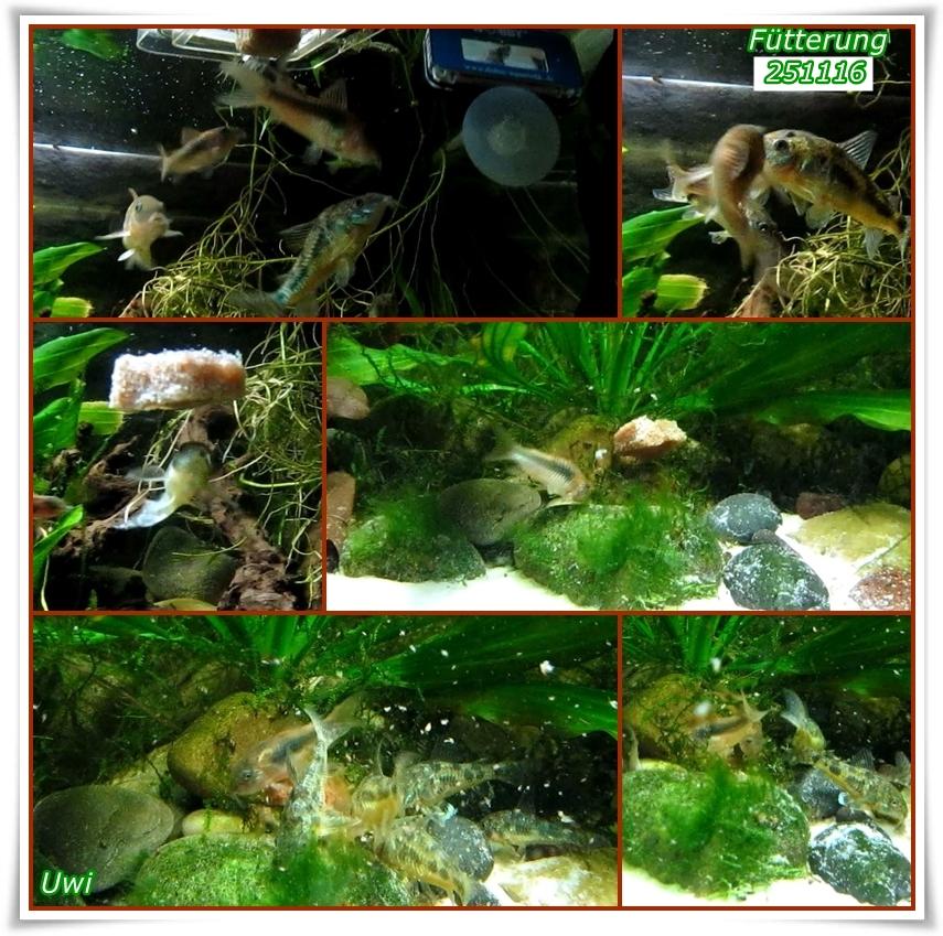 http://uwe.edatasystem.com/aquarium2016/106fuetterung251116.jpg