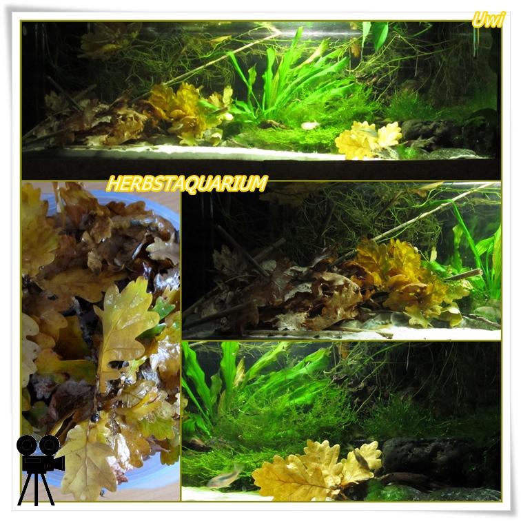 http://uwe.edatasystem.com/aquarium2016/87herbstaquarium.jpg