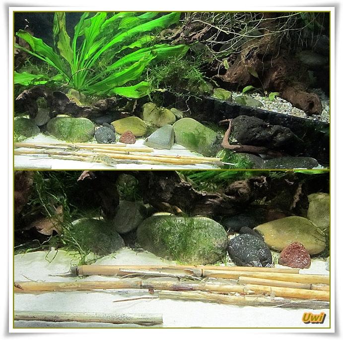 http://uwe.edatasystem.com/aquarium2016/97ausgemistet.jpg