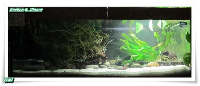 http://uwe.edatasystem.com/aquarium2017/004becken6jaenner.JPG