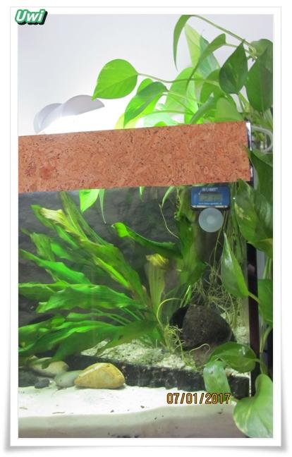 http://uwe.edatasystem.com/aquarium2017/005terrasse070117.JPG