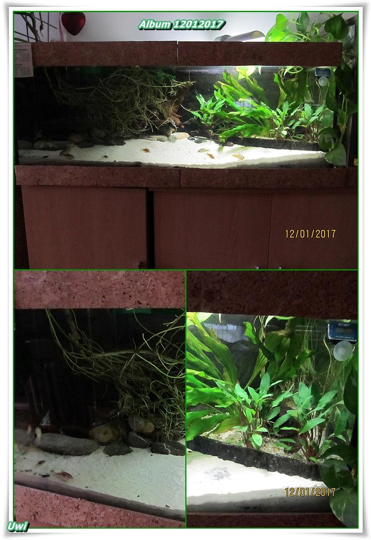 http://uwe.edatasystem.com/aquarium2017/006album120117.jpg
